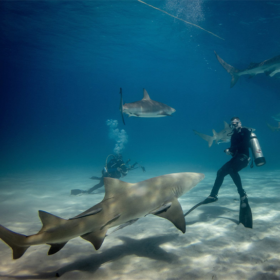 bull-shark-dive-home-playa-del-carmen