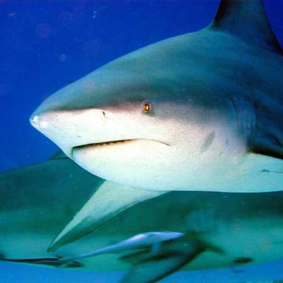 tiburon-toro-dive-home